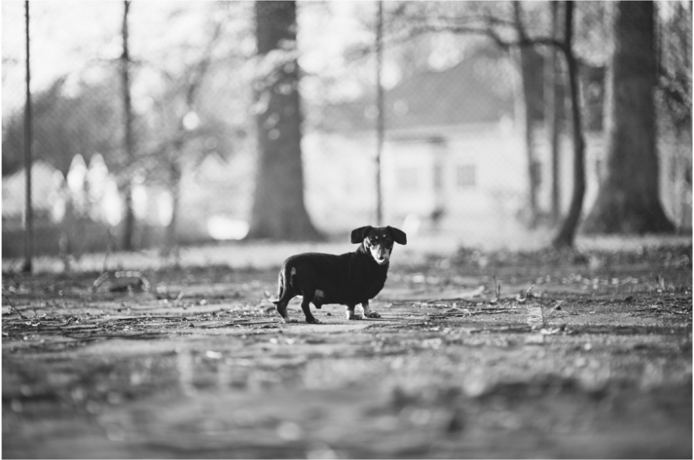 virginia pet photographer
