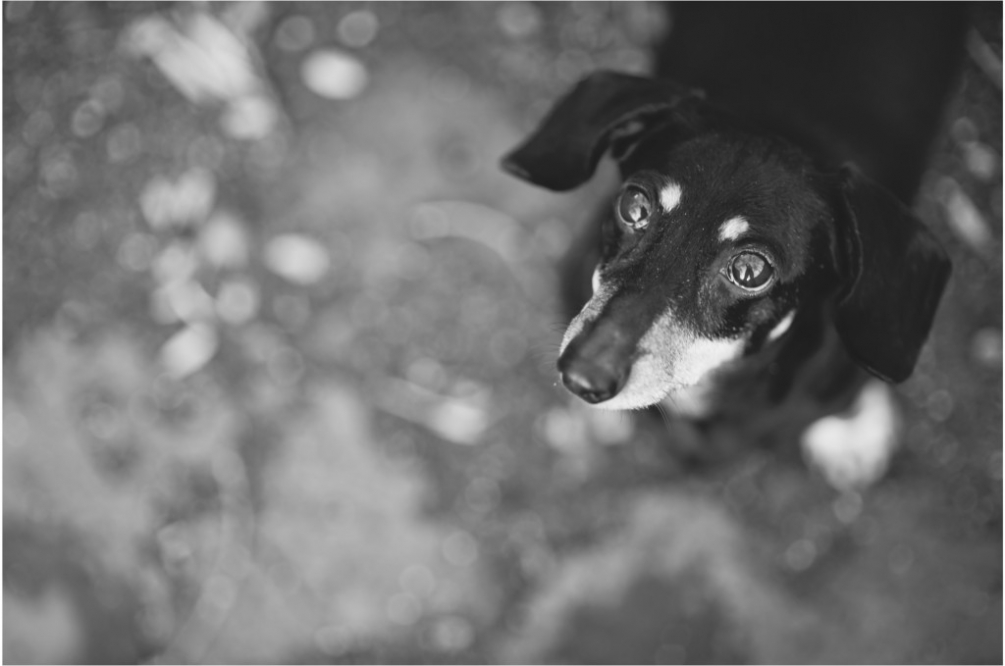 pet photographer in dc